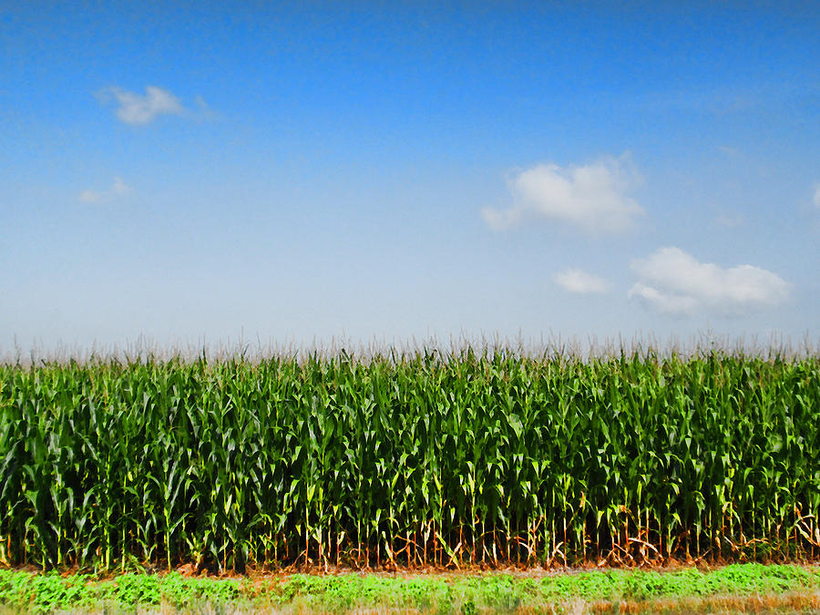 Corn Row Photograph  - Corn Row Fine Art Print