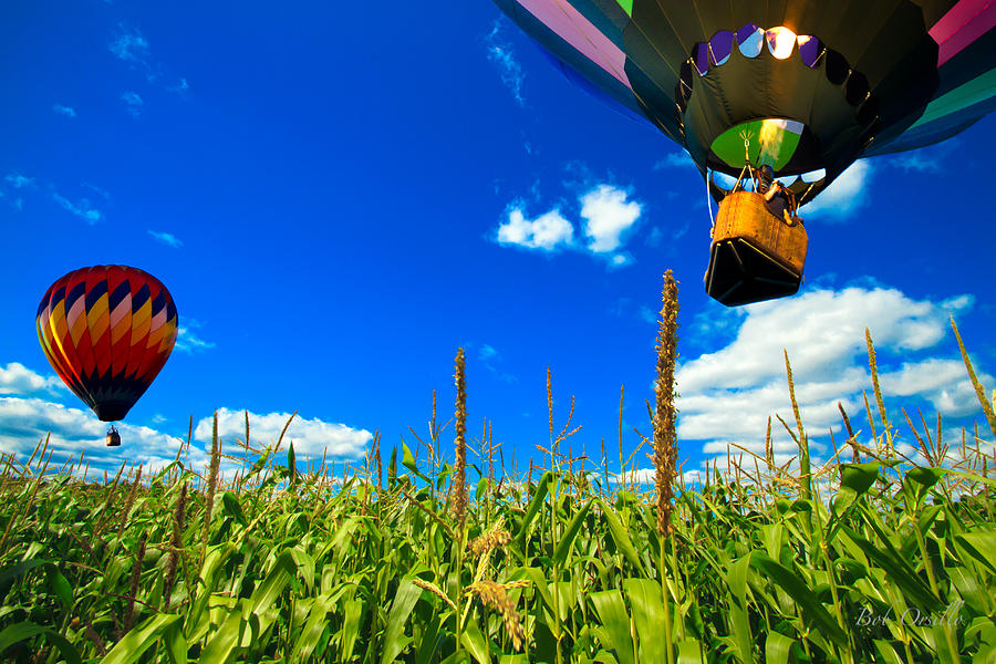 Cornfield View Hot Air Balloons Photograph