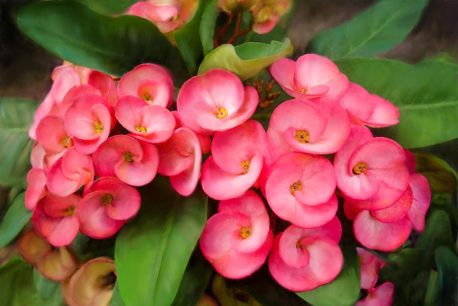Flower pink flower nature venezuelan flower flower lovers nature