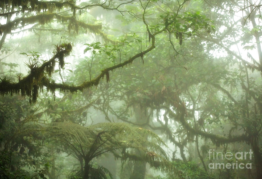 Costa Rican Cloud Forest Photograph  - Costa Rican Cloud Forest Fine Art Print