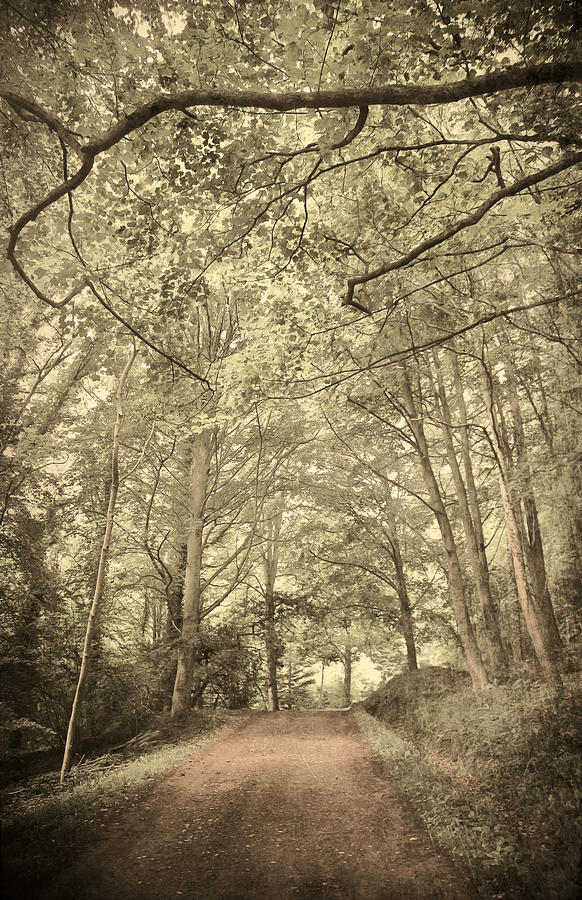 Cosy Path Photograph  - Cosy Path Fine Art Print