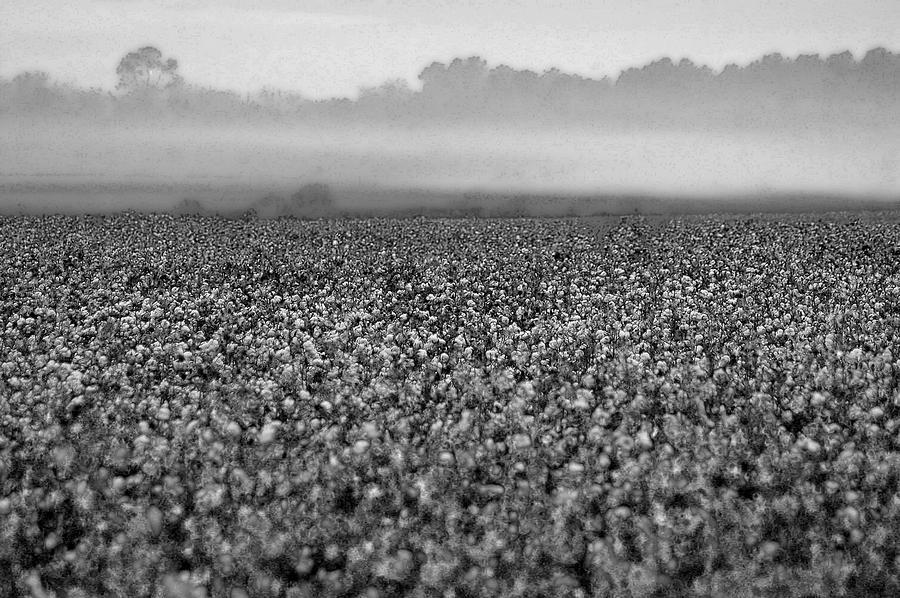Cotton And Fog Digital Art