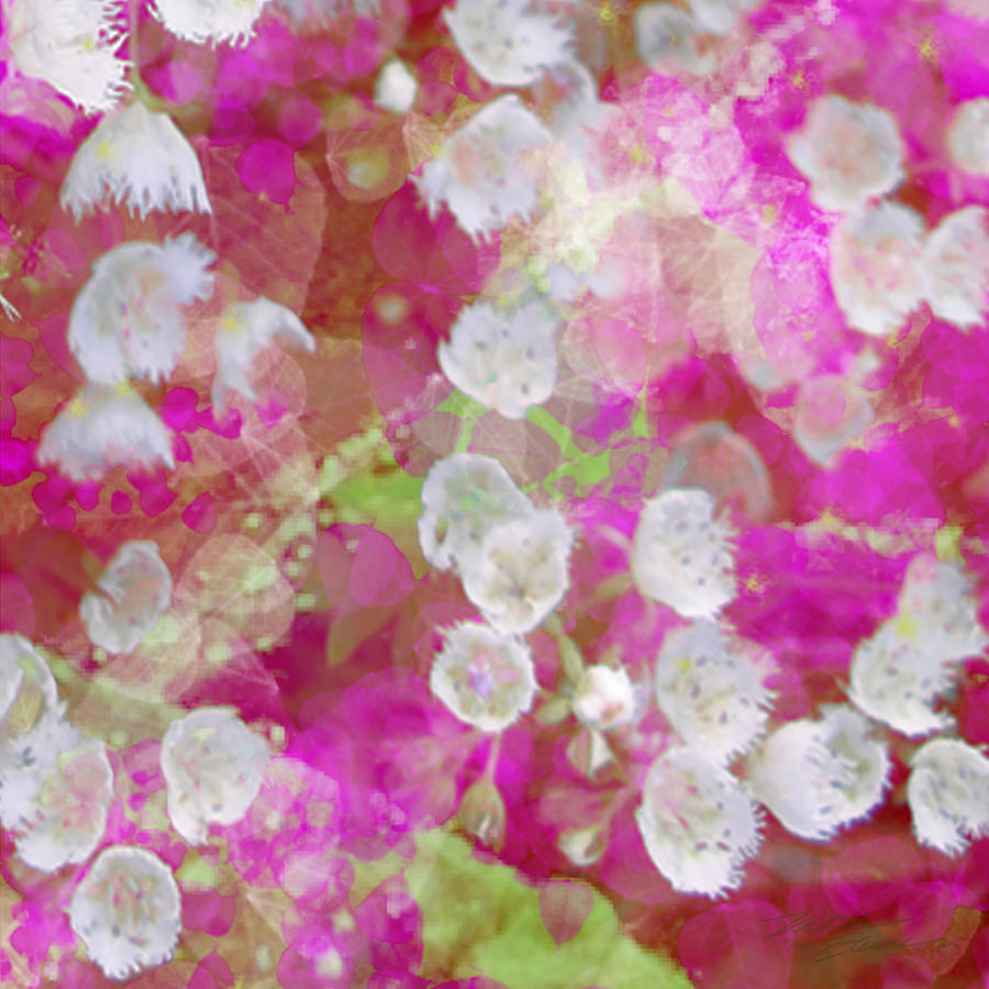 Cotton Candy Blossoms Iv Mixed Media  - Cotton Candy Blossoms Iv Fine Art Print