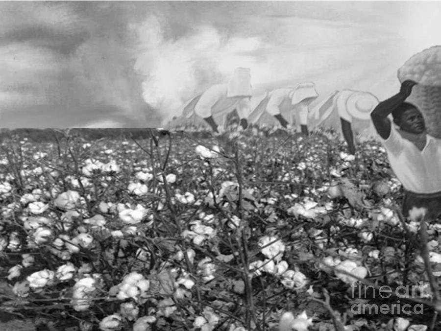 Cotton Field Digital Art  - Cotton Field Fine Art Print