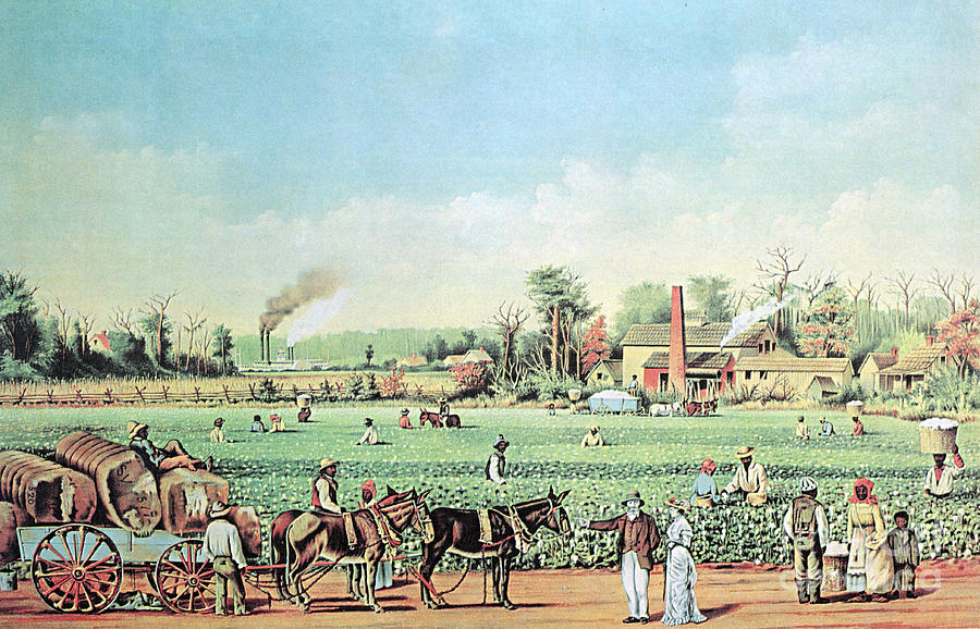 Cotton Plantation On The Mississippi Photograph
