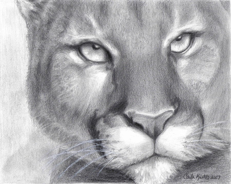 Cougar Spirit Drawing  - Cougar Spirit Fine Art Print