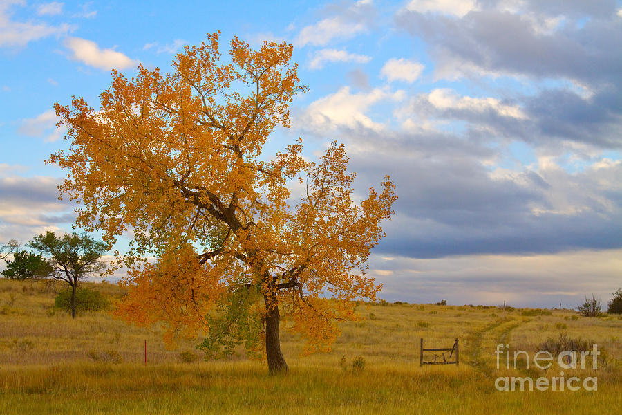 Country Autumn Landscape Photograph  - Country Autumn Landscape Fine Art Print