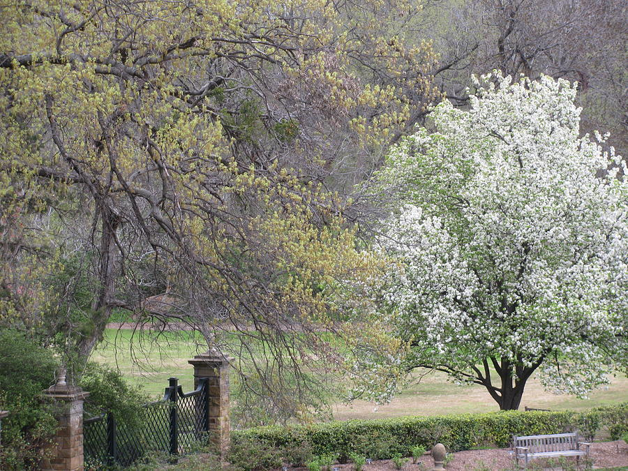 Trees Blooming Photograph - Country Elegance by Shawn Hughes