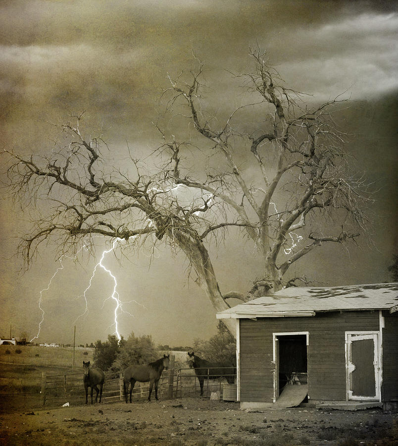 Country Horses Lightning Storm Ne Boulder Co 66v Bw Art Photograph  - Country Horses Lightning Storm Ne Boulder Co 66v Bw Art Fine Art Print