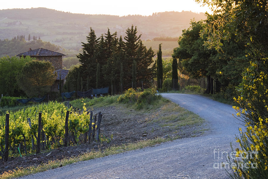 Agriculture Photograph - Country Road At Sunset by Jeremy Woodhouse