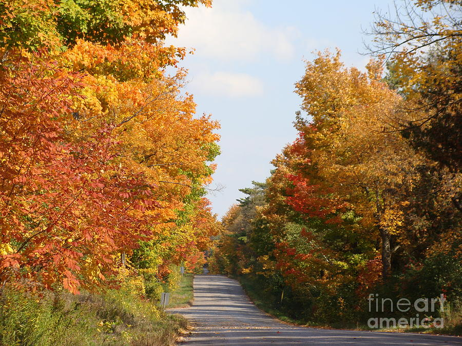 Autumn Leaves Canvas Prints Photograph - Country Road by Beverly Livingstone