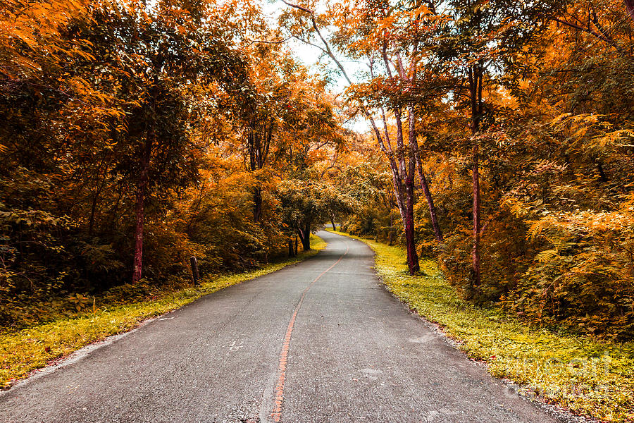 Countryside Road In Autumn Photograph