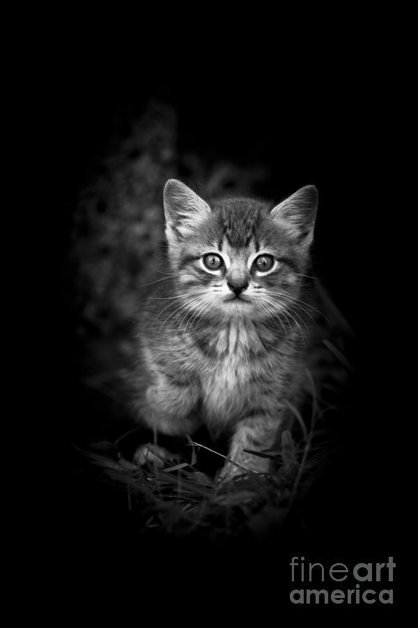 Kitten Mixed Media - Courageous by Kim Henderson