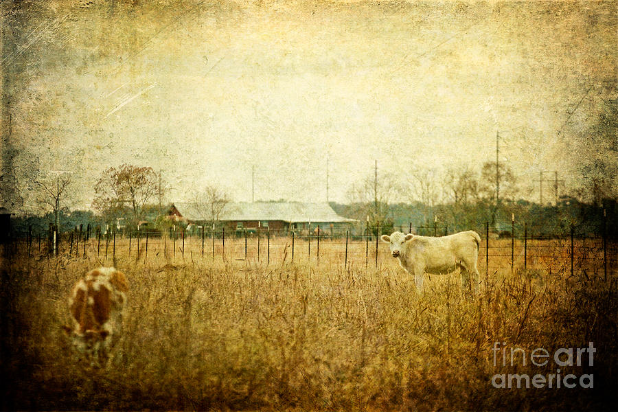 Cow Photograph - Cow Pasture by Joan McCool