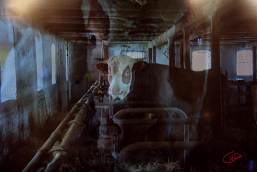 Cow Shelter Indoor Photograph  - Cow Shelter Indoor Fine Art Print