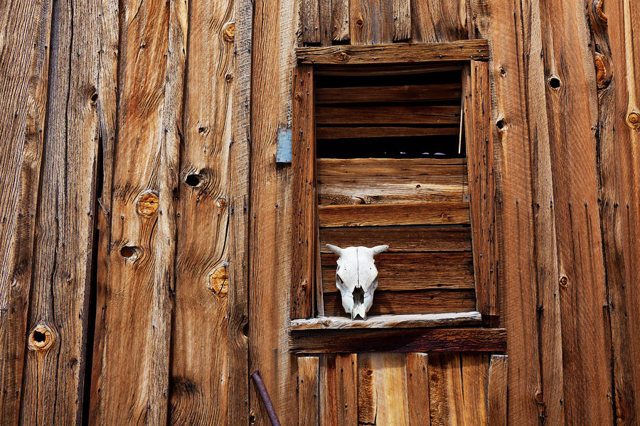 Cow Skull In Wooden Window Photograph