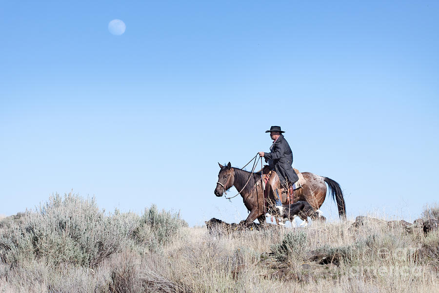 Cowboy Photograph - Cowboy Desert Moon by Cindy Singleton
