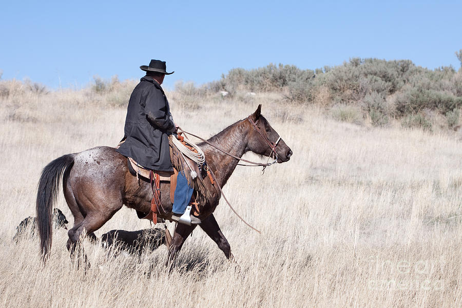 Cowboy On Horseback Photograph  - Cowboy On Horseback Fine Art Print