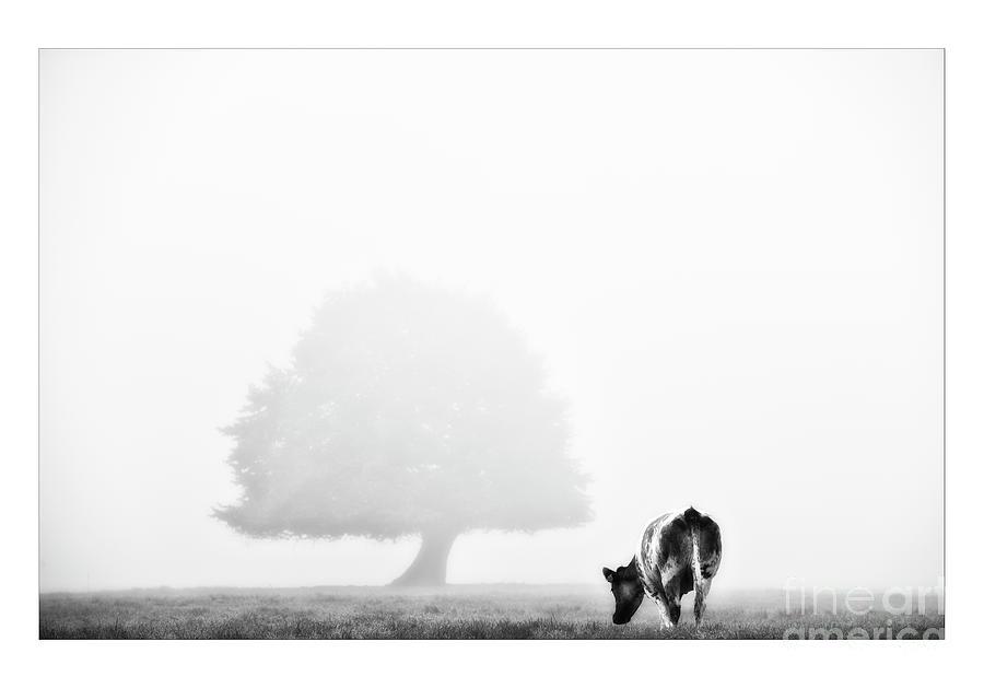 Cows Landscape Photograph Iv Photograph