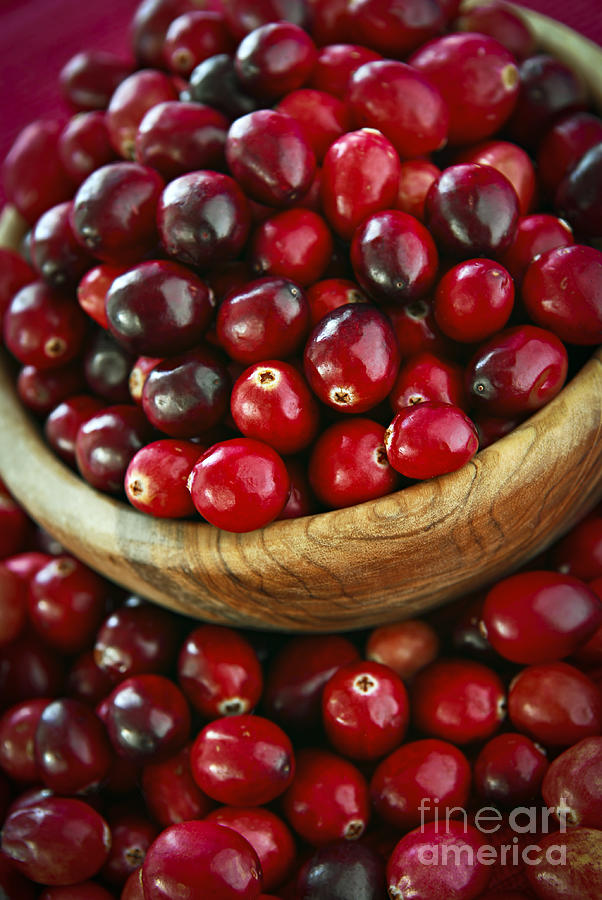 Cranberry Photograph - Cranberries In A Bowl by Elena Elisseeva