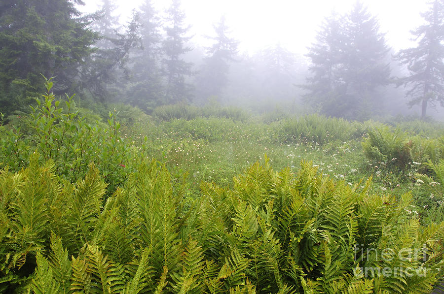 Cranberry Glades Early Morning Photograph