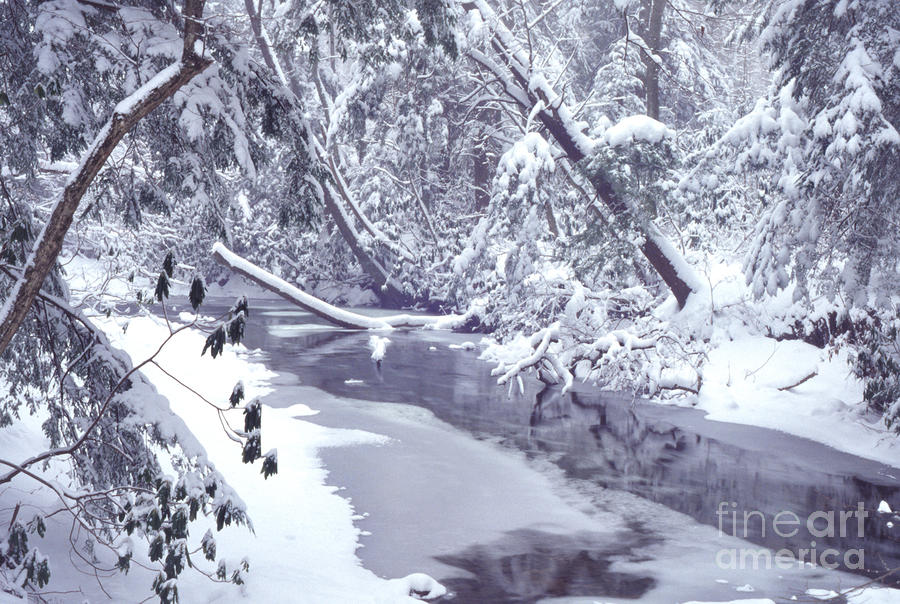 Cranberry River Winter Heavy Snow Photograph  - Cranberry River Winter Heavy Snow Fine Art Print