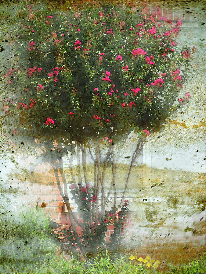 Crape Myrtle Digital Art