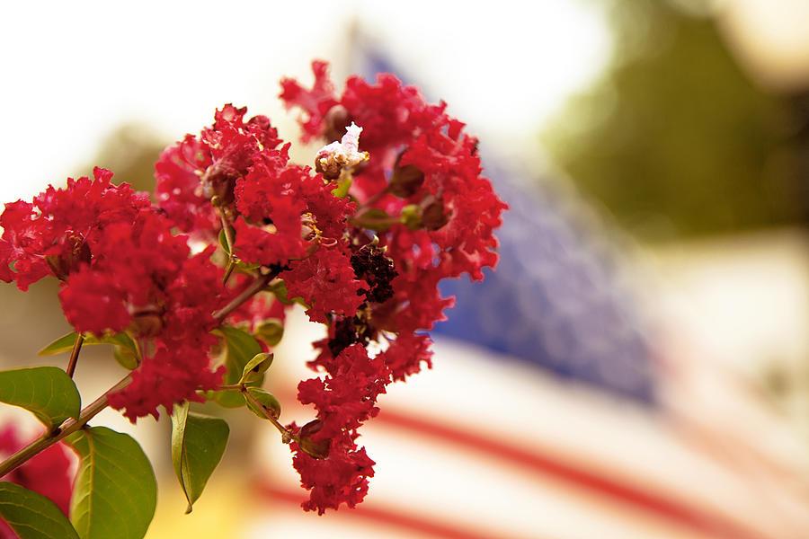 Floral Photographs Photograph - Crapemyrtle And Patriotic Proud by Toni Hopper