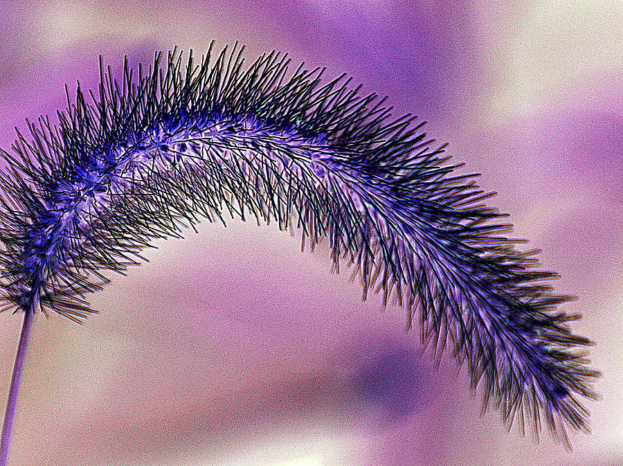 Abstract Photograph - Crazy Foxtail 1 by Marty Koch