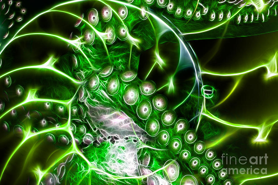 Creatures Of The Deep - Octopus Caught In The Swirl Of The Giant Nautilus - Electric - Green Photograph