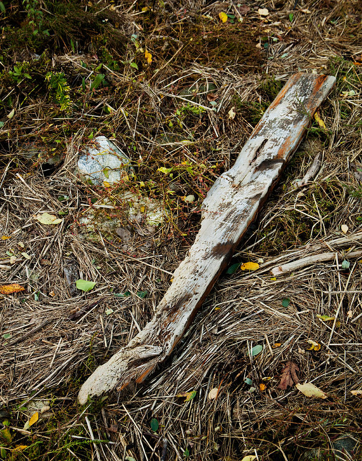 Creek Driftwood Photograph