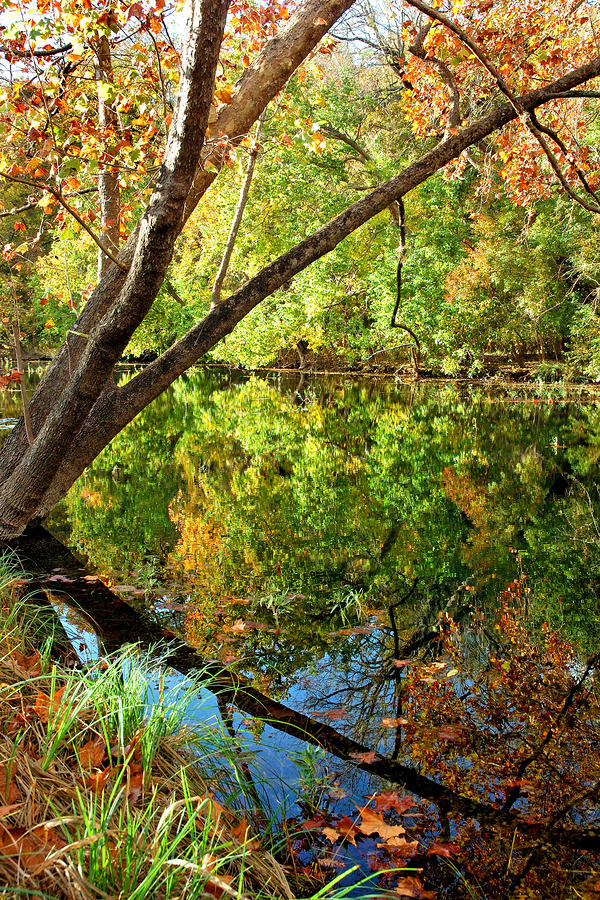 Creek Reflections Photograph  - Creek Reflections Fine Art Print