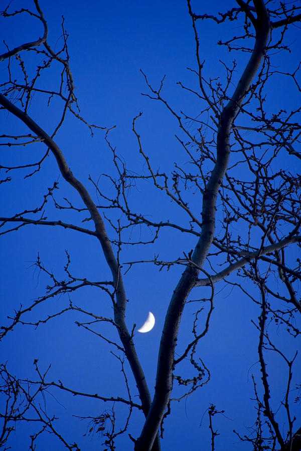 Crescent Moon In The V Of Trees Photograph  - Crescent Moon In The V Of Trees Fine Art Print
