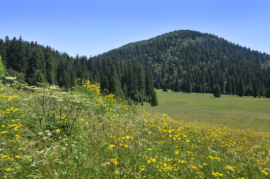 Croatian Meadow Photograph