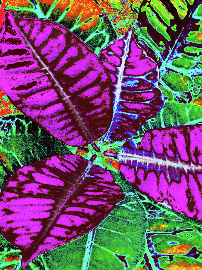 Croton - Purple Digital Art
