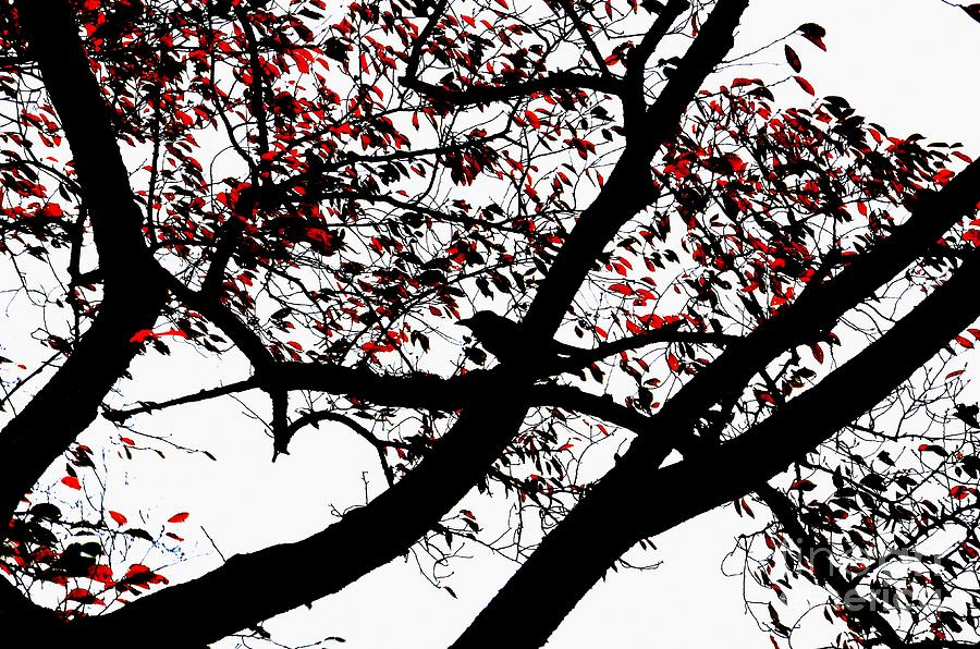 Crow And Tree In Black White And Red Photograph  - Crow And Tree In Black White And Red Fine Art Print