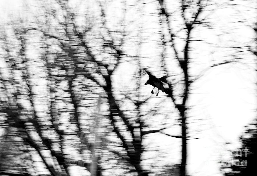 Crow Blur Photograph