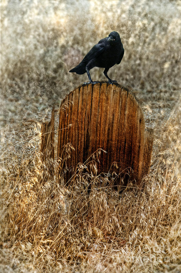 Crow On Old Wooden Grave Photograph  - Crow On Old Wooden Grave Fine Art Print