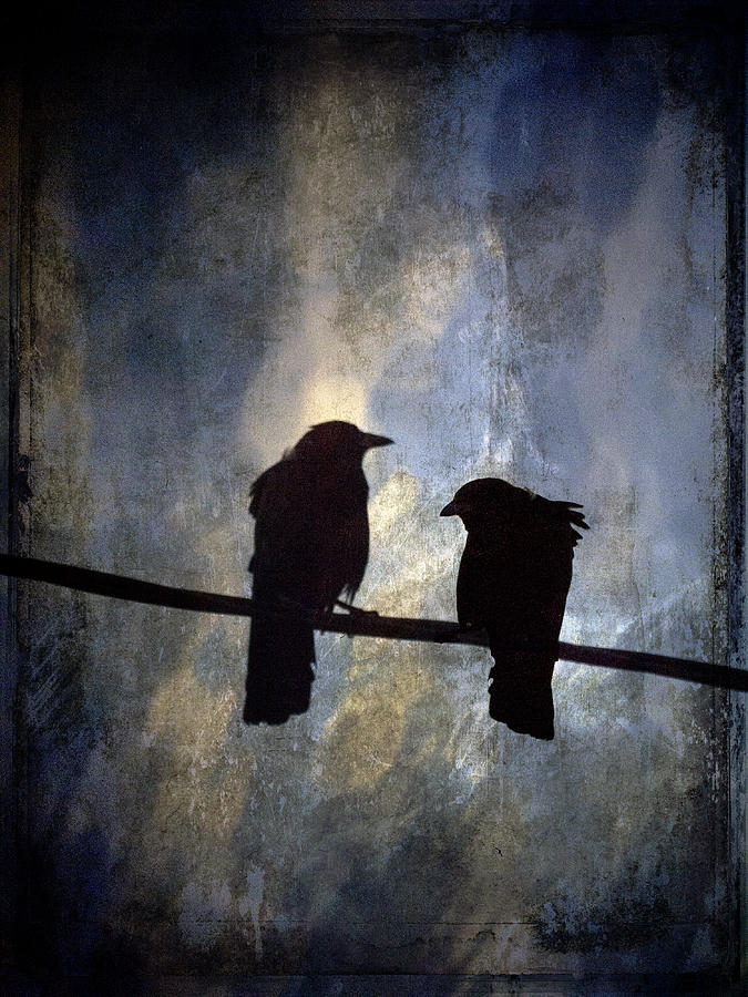 Crows And Sky Photograph