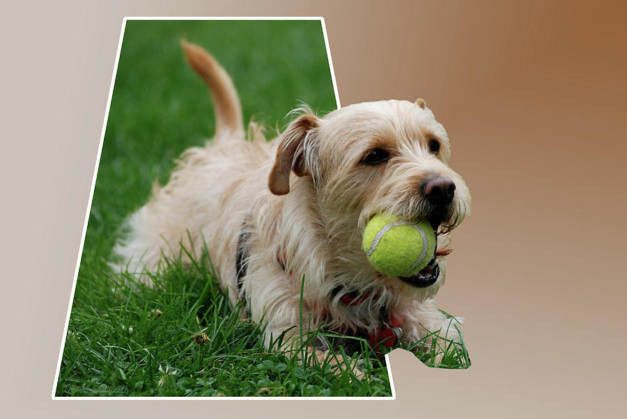 Dog Photograph - Cruz My Ball by Thomas Woolworth