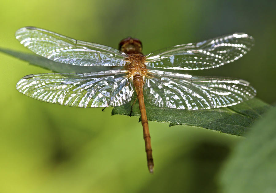 Crystal Wings Photograph