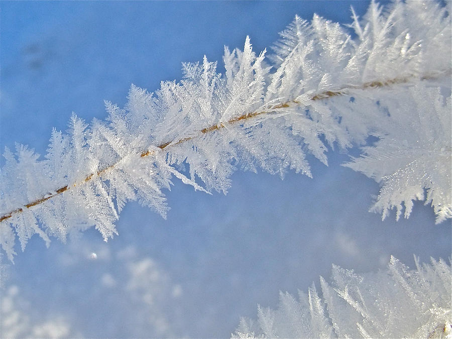 Crystalline Morning Photograph  - Crystalline Morning Fine Art Print