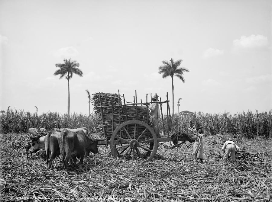 Cuba Sugar Plantation By Granger