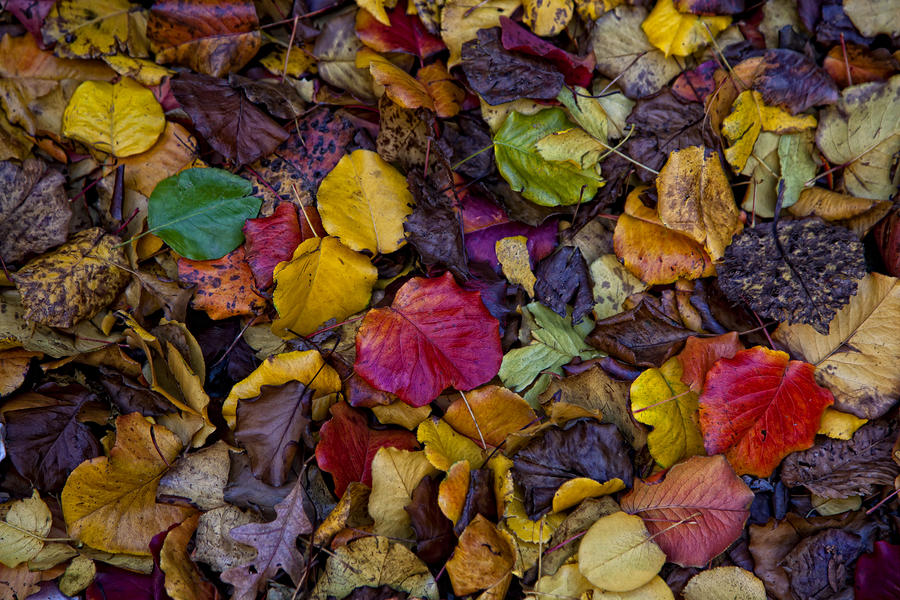 Curbside Leaf Litter Photograph  - Curbside Leaf Litter Fine Art Print