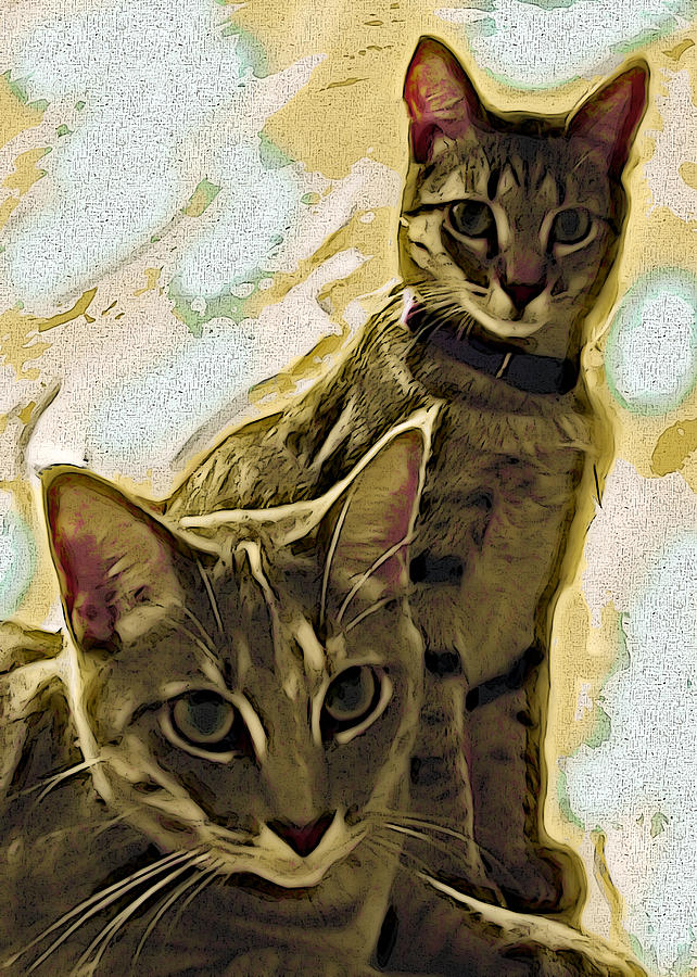 Curious Cats Photograph  - Curious Cats Fine Art Print