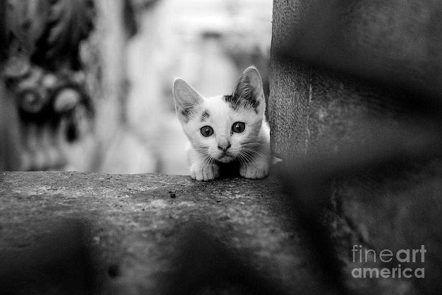 Animals Photograph - Curious by Dean Harte