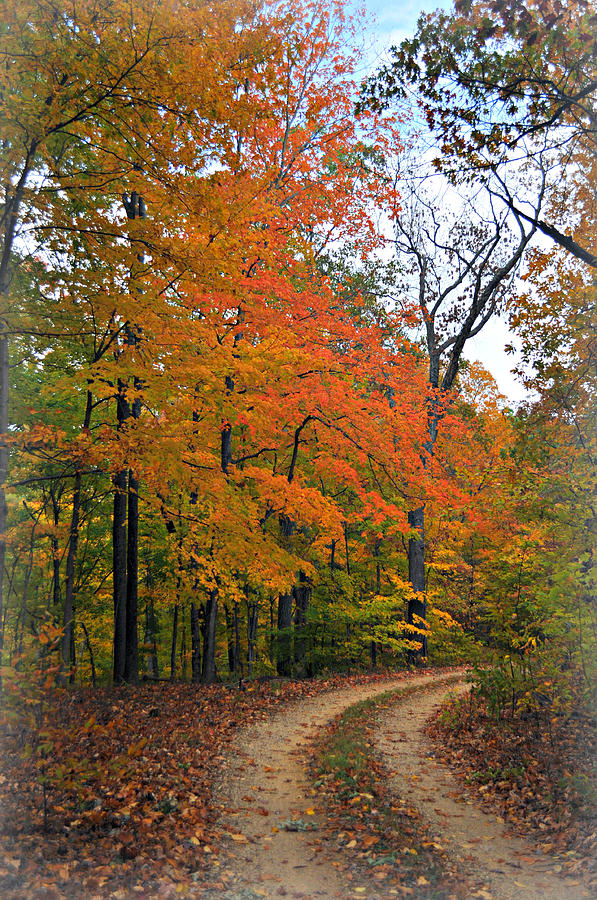 Curve In Fall Photograph  - Curve In Fall Fine Art Print