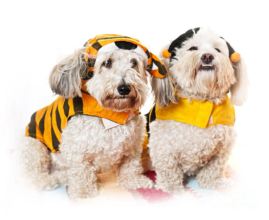 Cute Dogs In Halloween Costumes Photograph