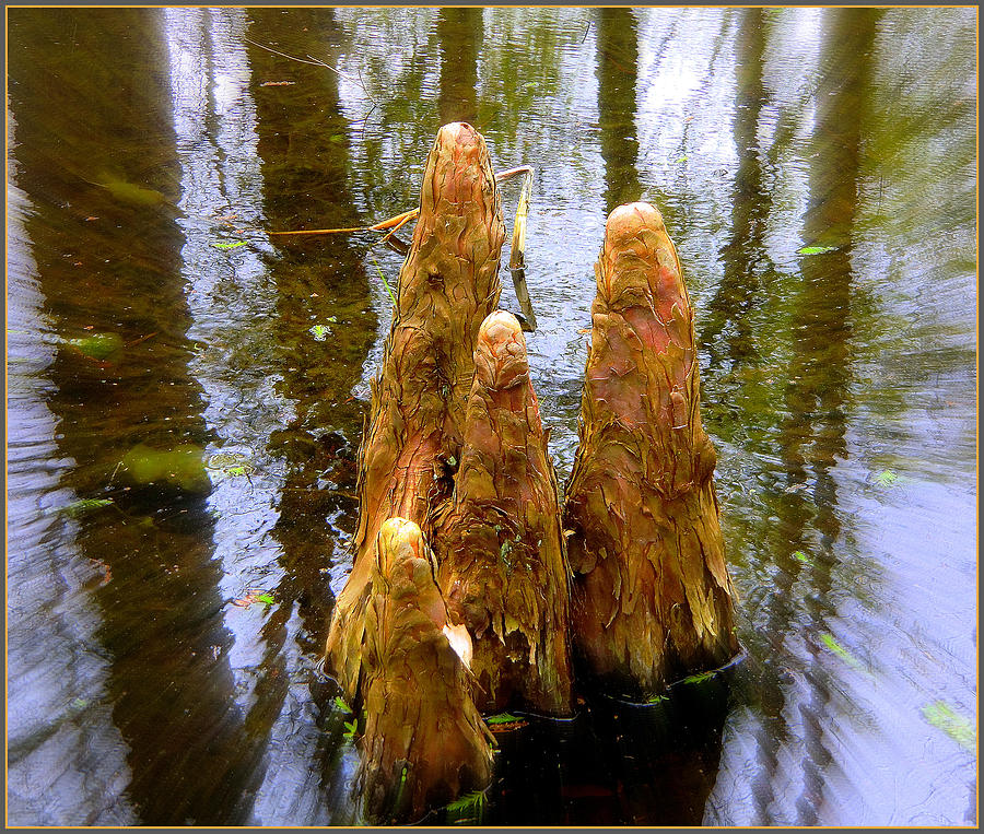 Cypress Family Of Monks Photograph