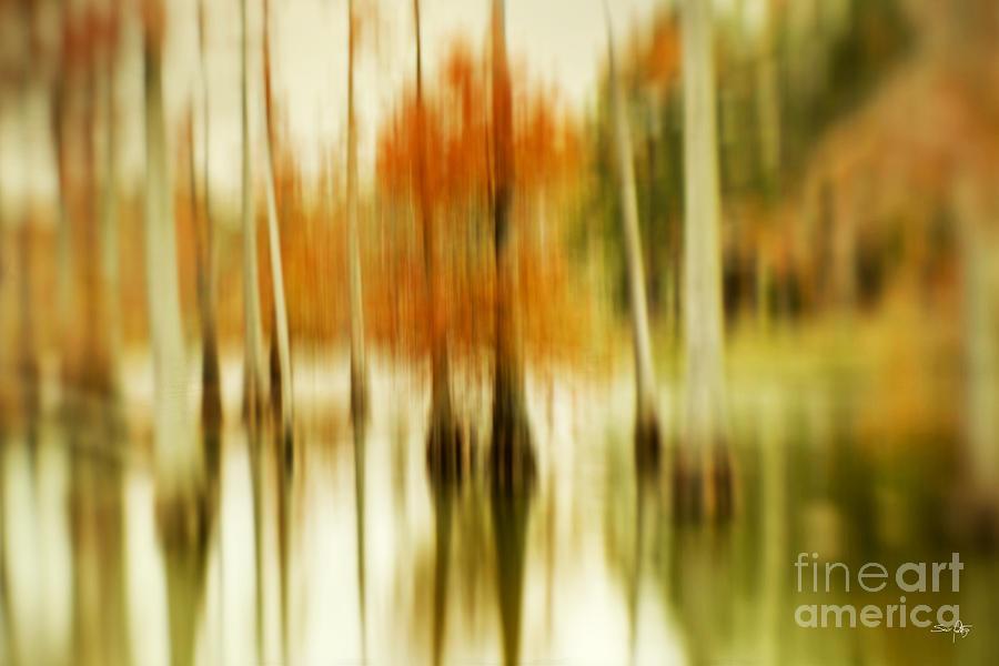 Lensbaby Photograph - Cypress Morning by Scott Pellegrin